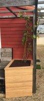 jardinière hexagonale en chêne pour kiwi